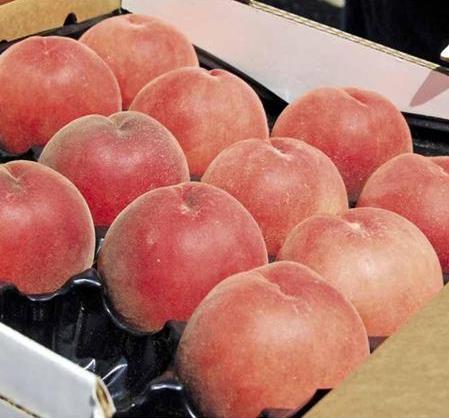Персик Розовая леди